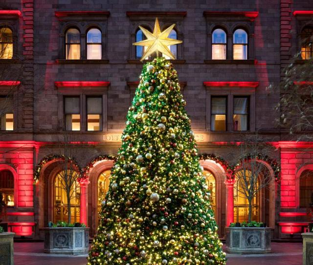 Christmas Trees Nyc Park Ave Lotte New York