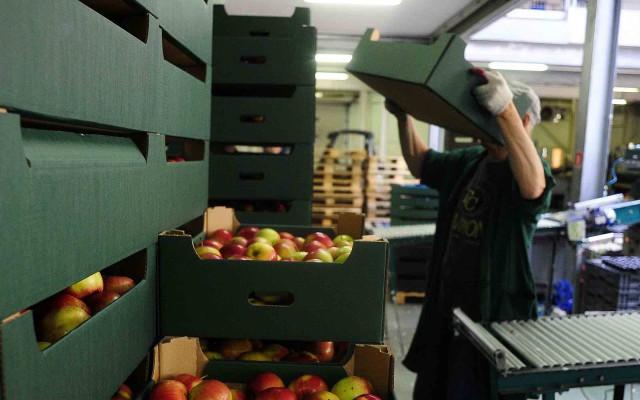 Un empleado moviendo cajas con manzanas (Reuters).
