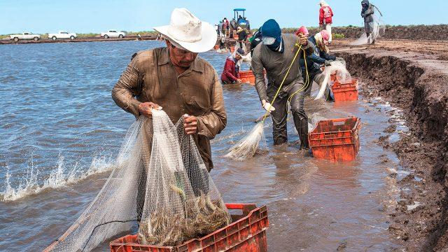 México y EU acuerdan proceso para levantar embargo a pesca de camarón