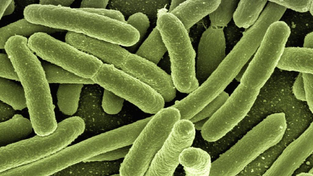 bacterias-escherichia-coli