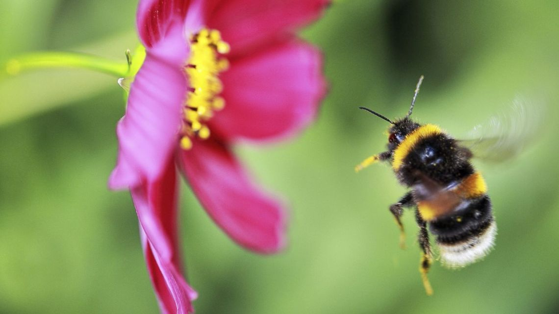 Bee Friendly Plants For Every Season Friends Of The Earth