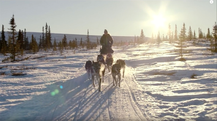 Dog Sledding: How the Races Helped One Photographer Come Back From the Dark