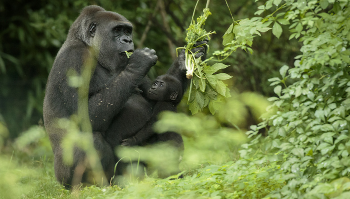 Ethical Wildlife Photography Tips From National Geographic