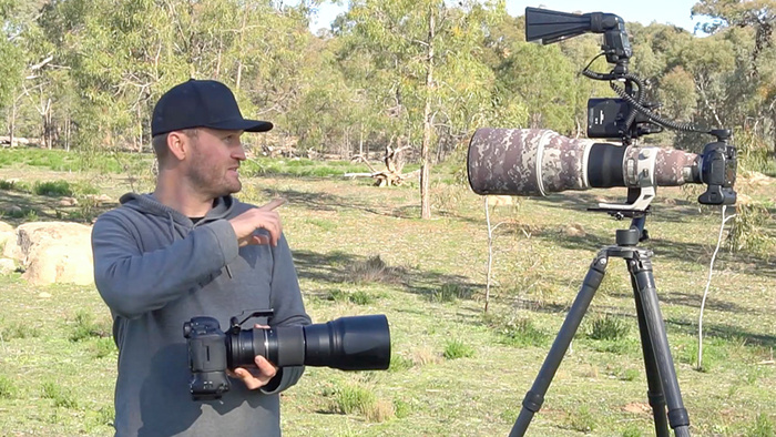 $20,000 Versus $2,000 Bird Photography Setup