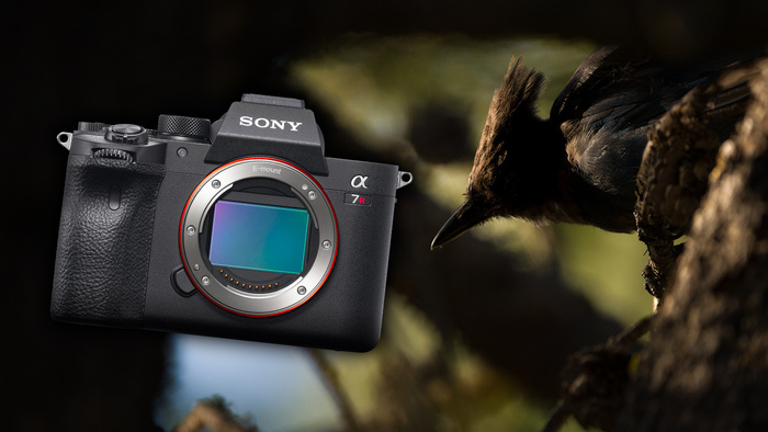 Why I Bought the Sony a7R IV for Wildlife Photography