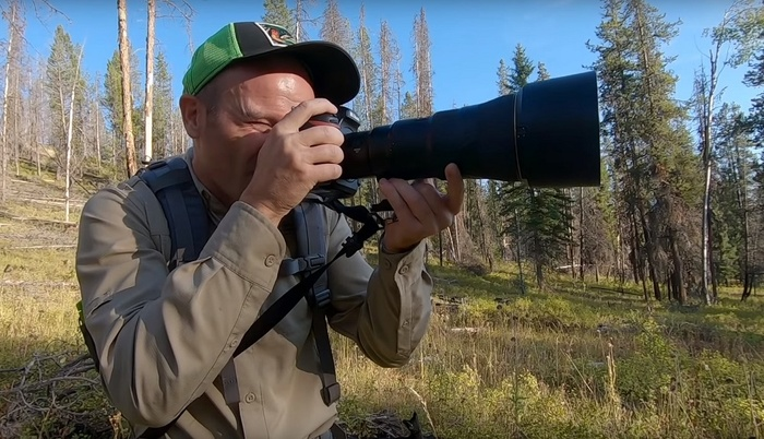 Have You Ever Wondered What Photographing Gray Owls in the Wild is Like?