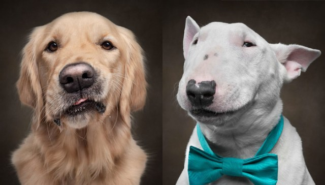 Photographer Captures Dogs Displaying Human Expressions