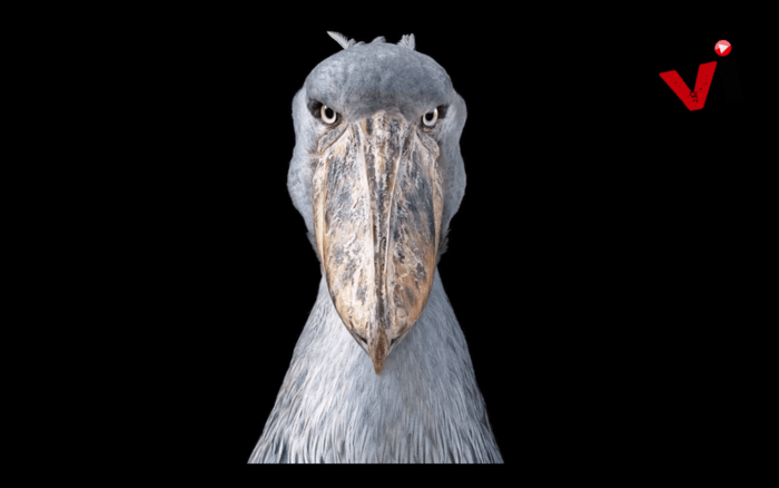 Studio Portraits of the World's Most Extravagant and Endangered Species