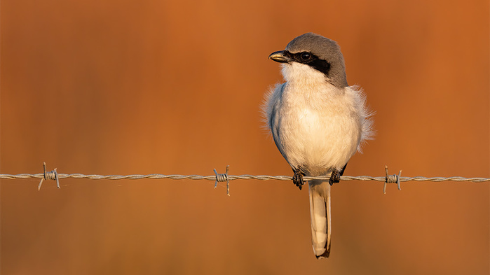 Incredible Bird Photography With the Sony 600mm f/4 GM and a7R IV