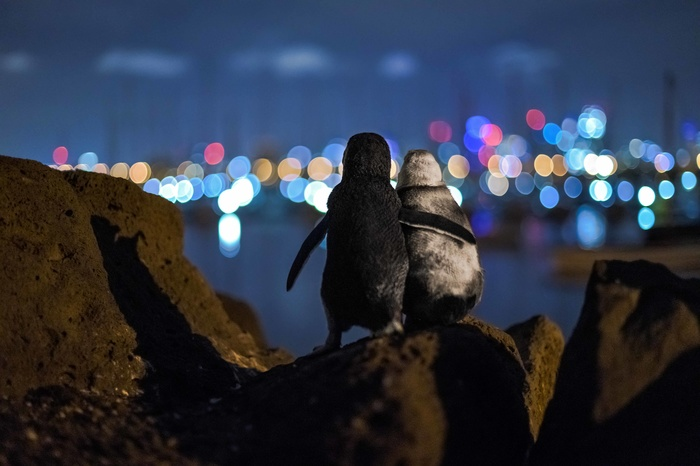 Photographer Catches Penguins Comforting Each Other as They Admire Skyline View