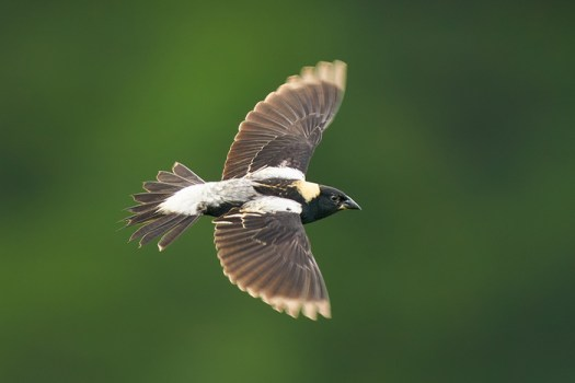 Perseverance in Bird Photography