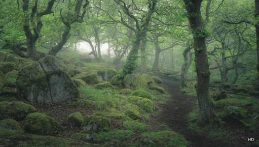 7 Great Composition Tips for Woodland Photos