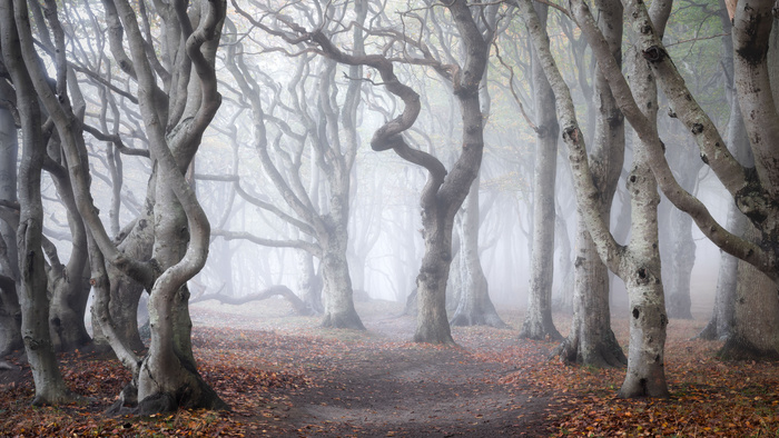 Seven Steps to Master Forest Photography