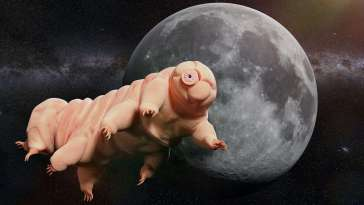Les tardigrades peuvent survivre à un tir de pistolet
