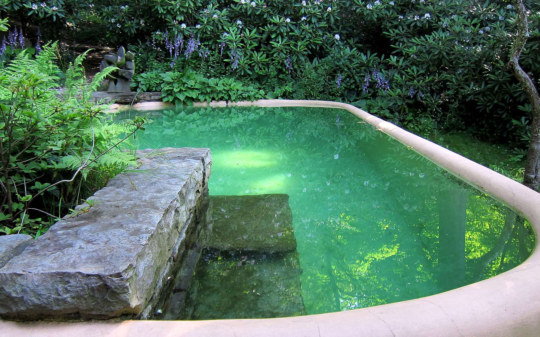 piscine naturelle les differentes