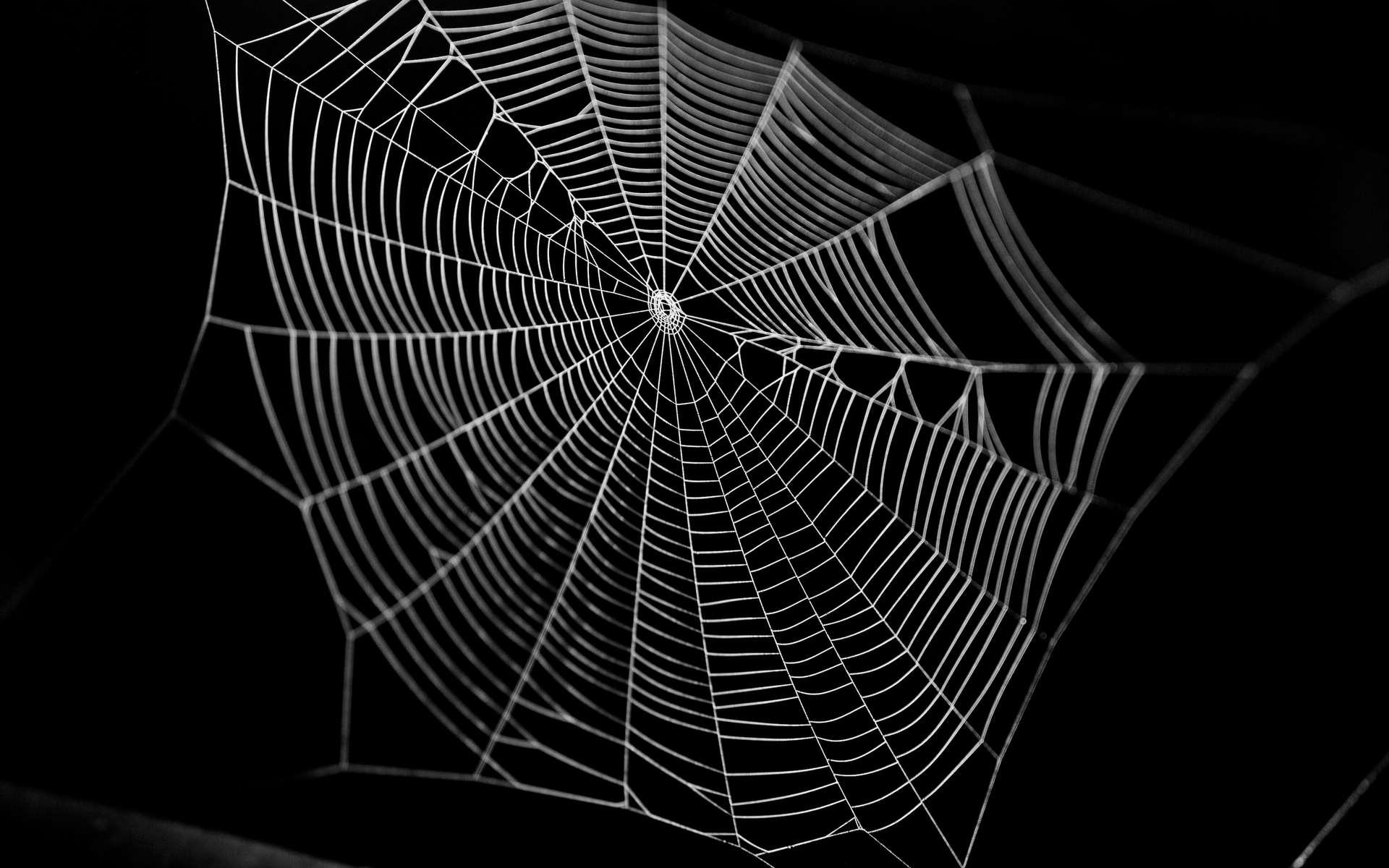Des chercheurs mettent en musique une toile d'araignée pour communiquer avec elle : écoutez, c'est surprenant !