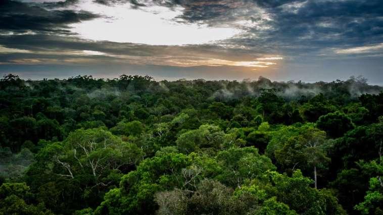 la forêt amazonienne émet désormais plus de CO2 qu'elle n'en absorbe depuis 10 ans !