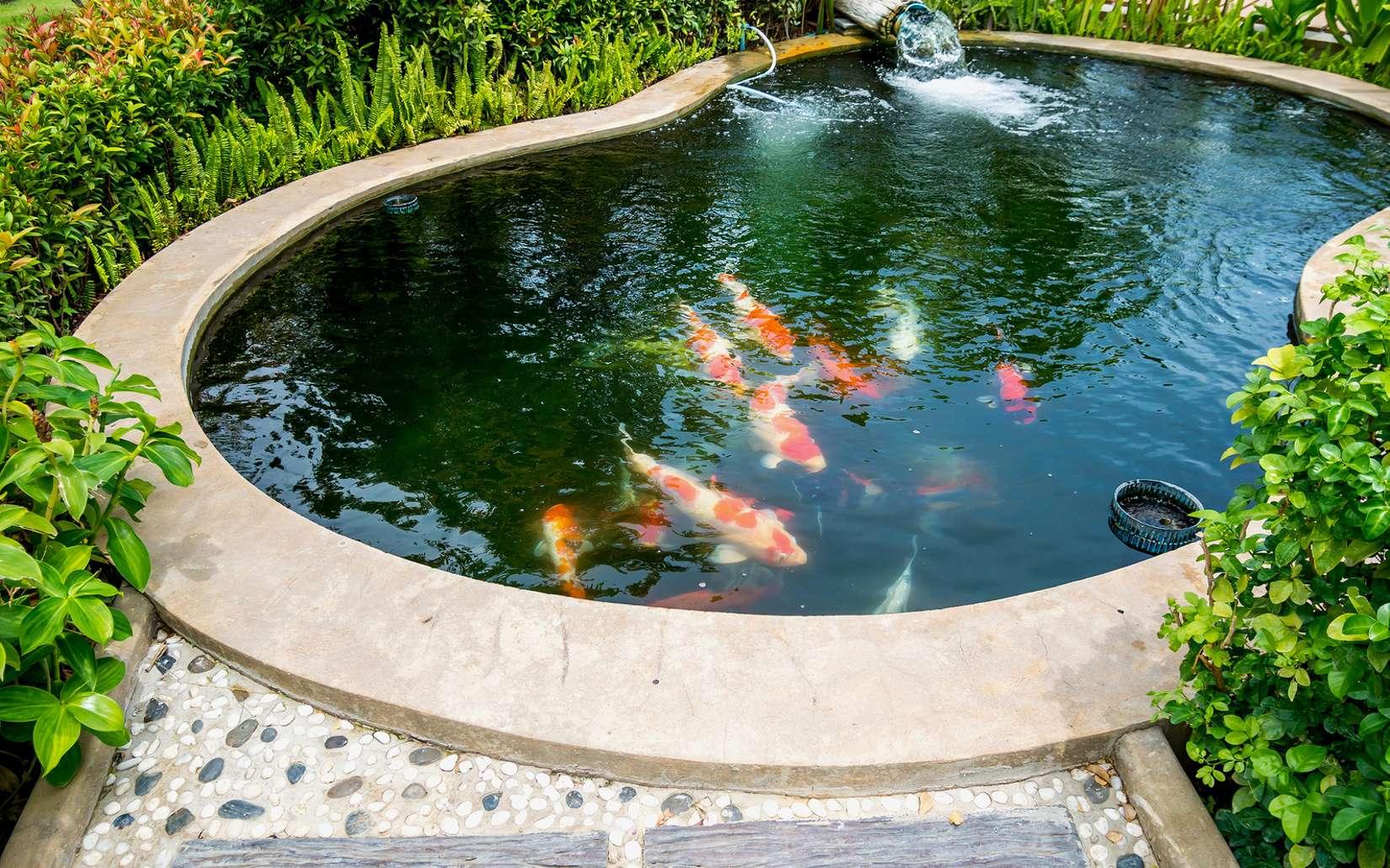 bassin de jardin quand introduire des