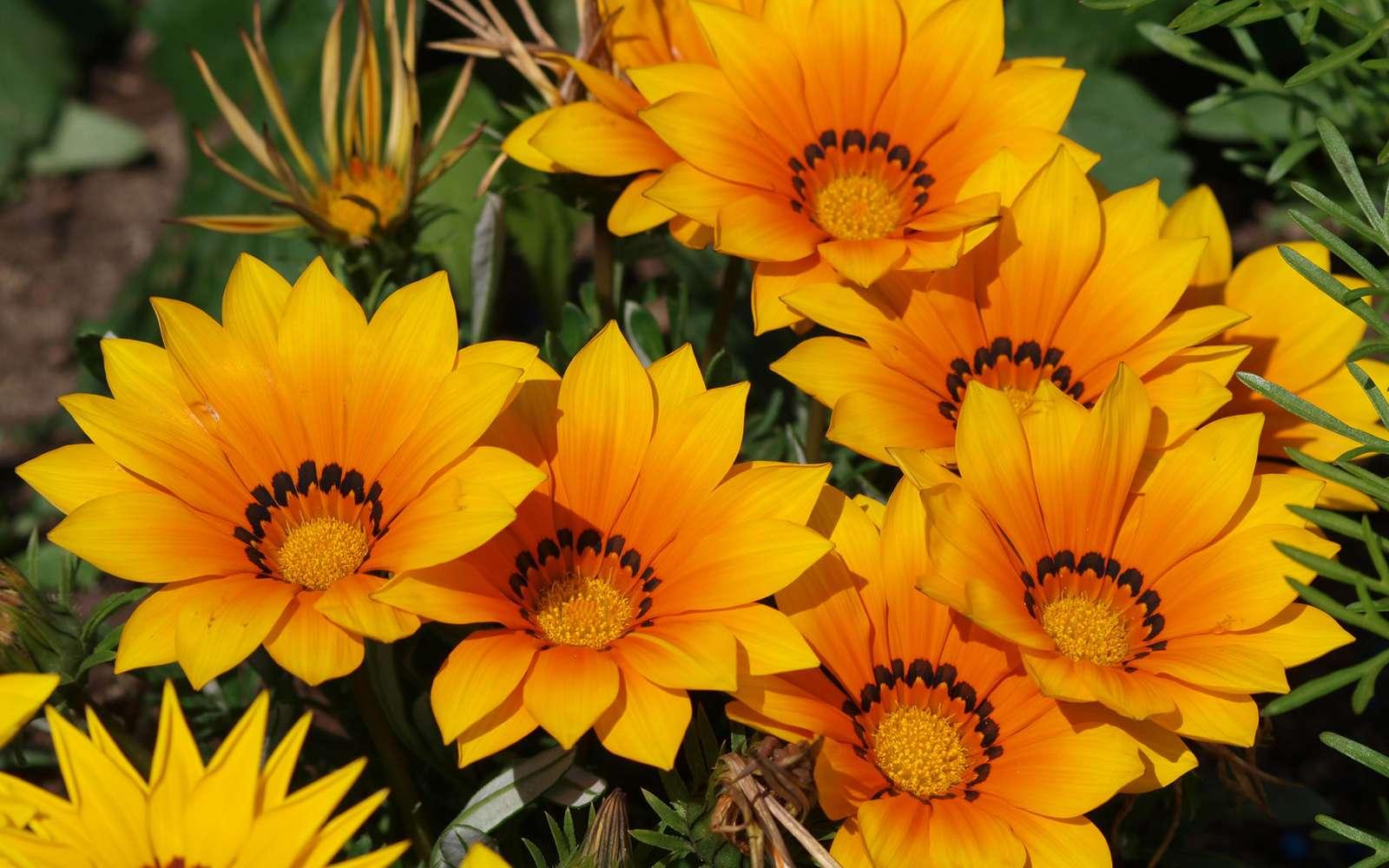 quelles fleurs d ete et vivaces pour