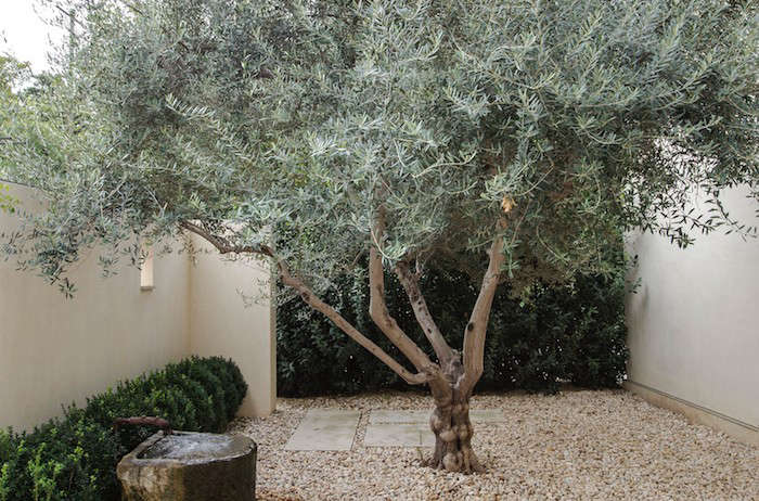 Genius Garden Ideas 10 Landscapes With Olive Trees