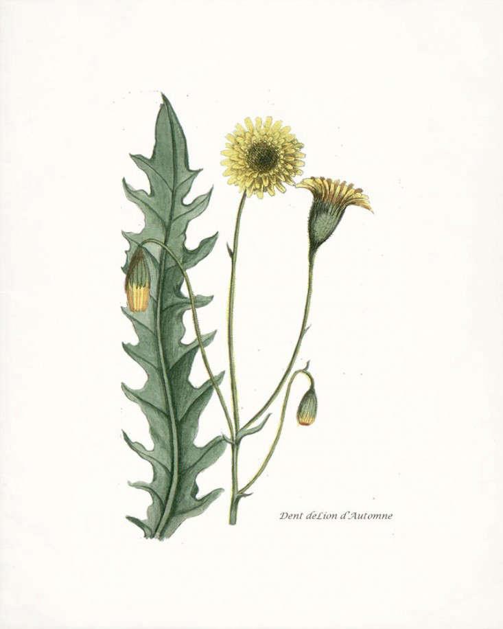 Favorite Botanical Illustrations Our 10 Best Sources For Vintage And New Gardenista
