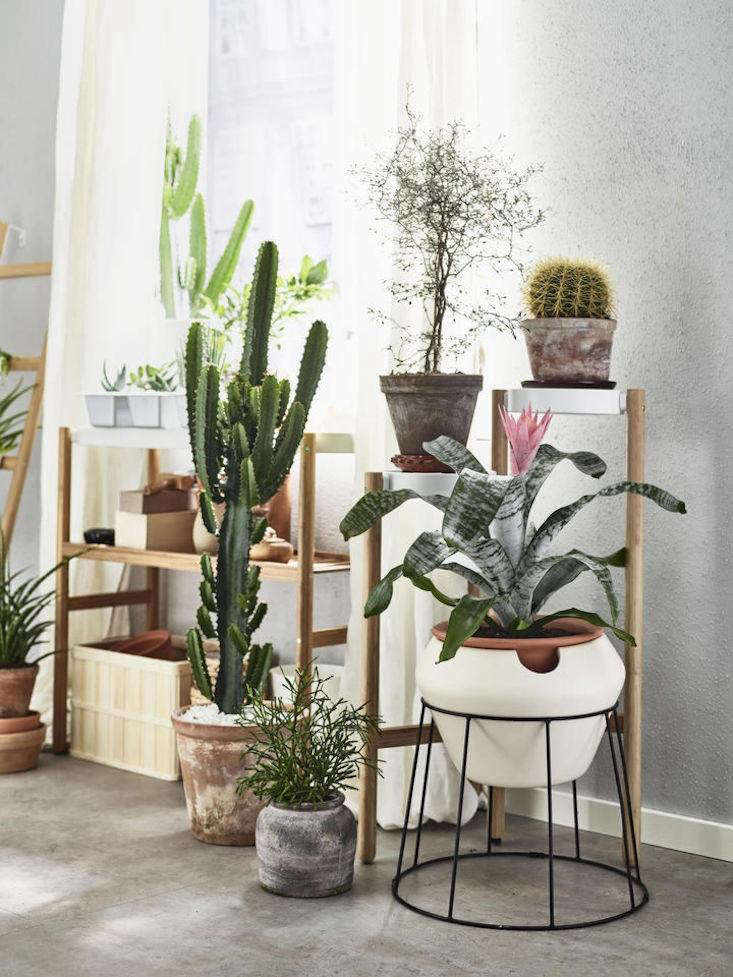 An Insider S Guide To Getting First Dibs On The Best Ikea Houseplants Gardenista