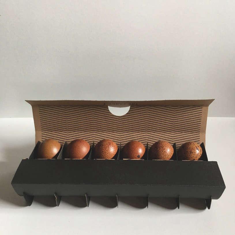 Farm Fresh Eggs Nyc