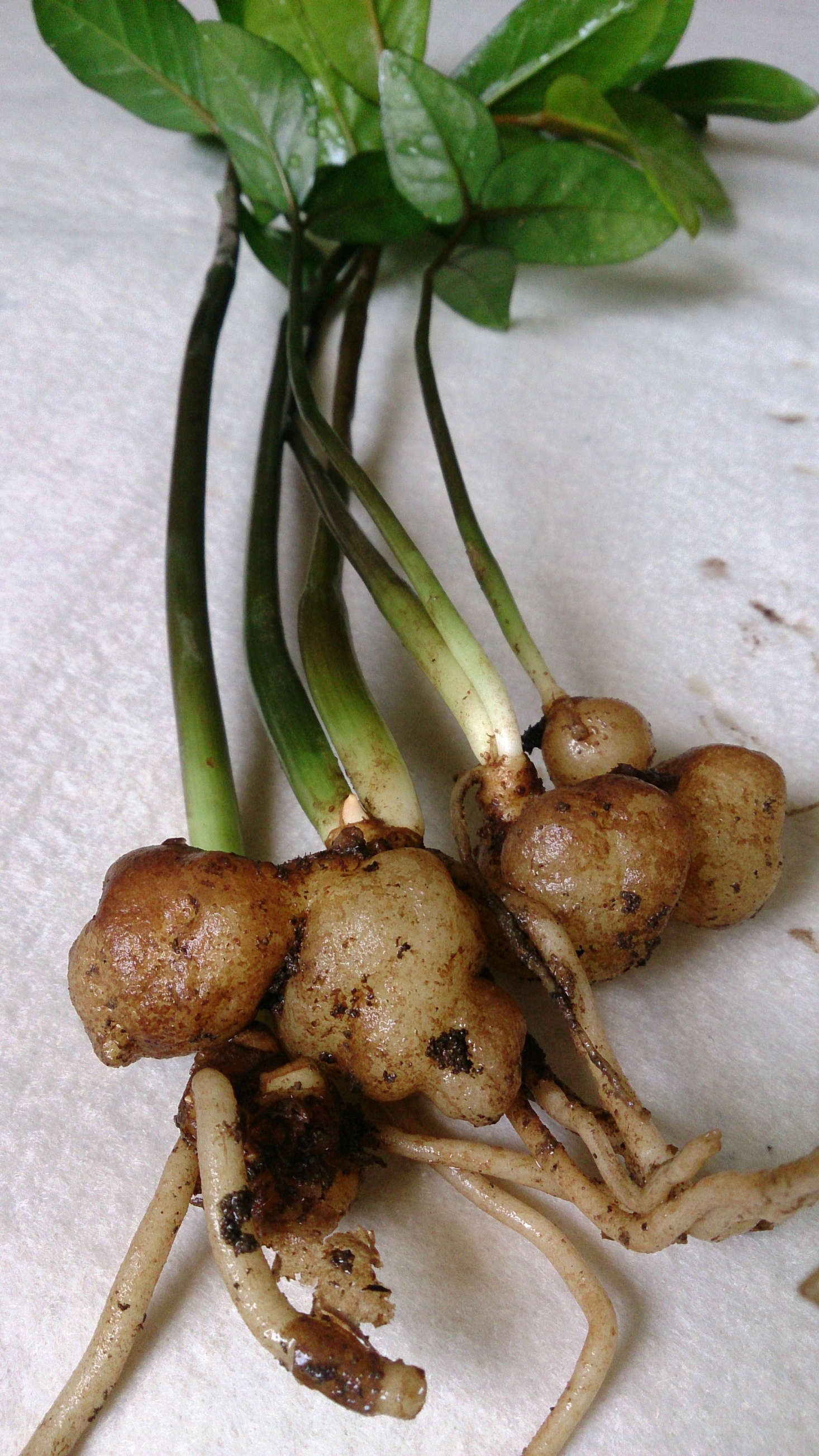 Houseplants 101 How To Propagate Plants