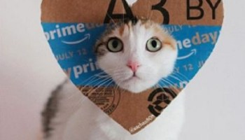 Amazon Prime Day cat