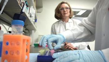 Fred Hutch study discovers rare set of cells that are highly effective at fighting cancer