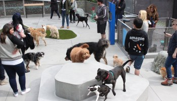 At dog friendly Amazon, could data on breeds set one city apart from the HQ2 pack?