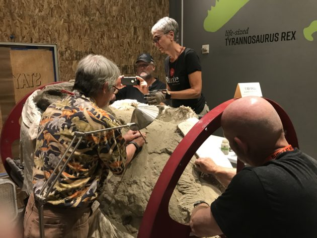 Working on the T. rex skull