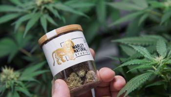 Marijuana investment firm Privateer Holdings raises $60M, total funding eclipses $200M