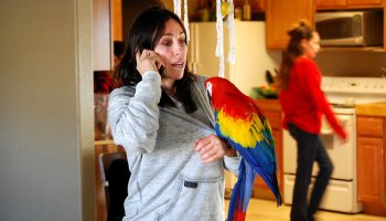Could parrots live in Amazon's Spheres? Heidi Fleiss, the ex 'Hollywood Madam,' wants to know