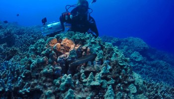 Allen Coral Atlas tracks changes in the world's reefs from space via satellite