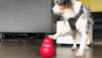 Can tech make your dog smarter? Seattle startup raises cash to build brain games for pets