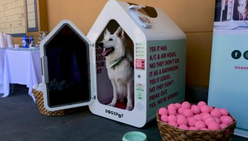Startup bets high-tech dog lockers will get shoppers to leave pups outside the grocery store