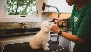 Rover launches in-home pet grooming service in bid for global pet care domination