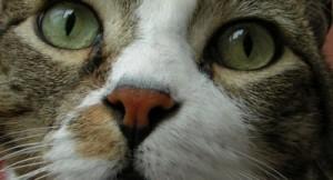 gatto3-460x250