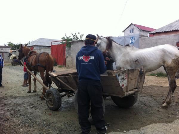 I veterinari di Save the Dogs a Medgidia, Romania