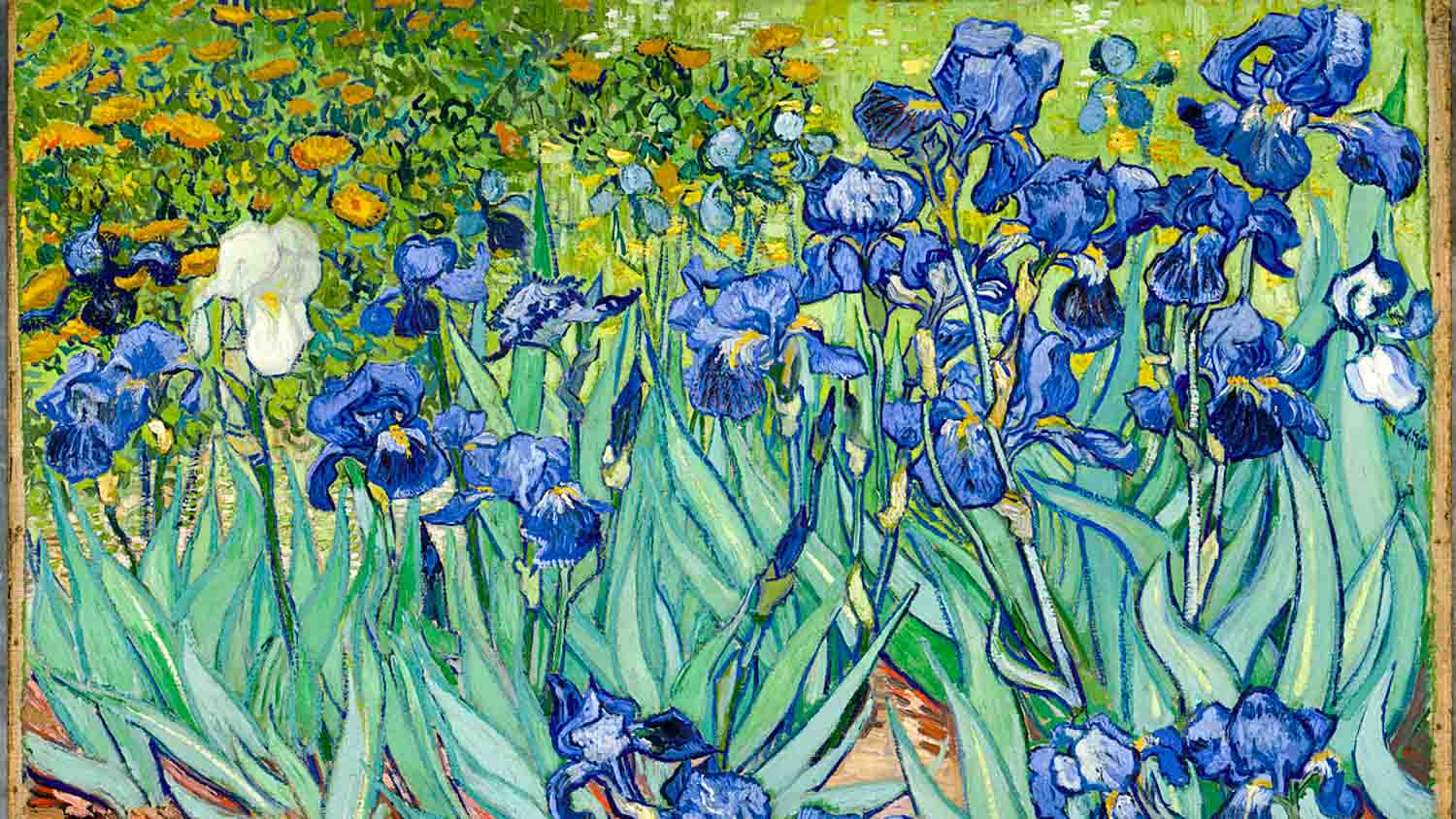 Van Gogh Museum Amsterdam Book Tickets Amp Tours