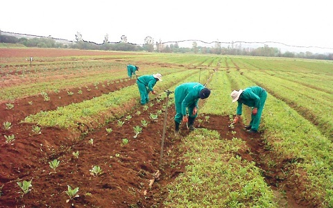 Over 5,000 farmers in Kwahu Afram Plains South benefit from PFJ programme