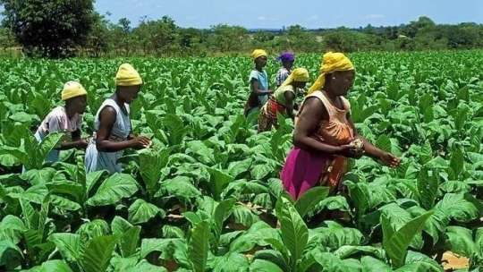 Agriculture stakeholders urged to champion agribusiness