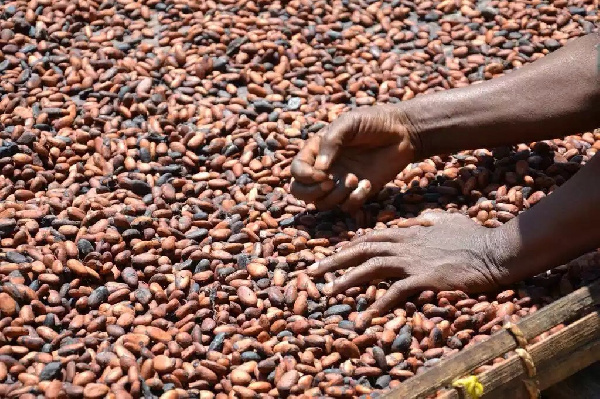 Ivory Coast lifts suspension of Hershey cocoa sustainability schemes