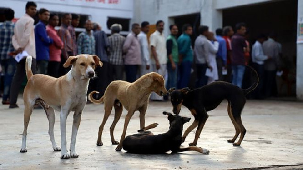 Ghana SPCA vaccinate over 100 dogs and cats against rabies