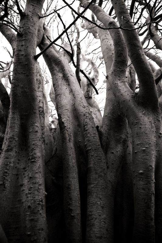 The Ents
