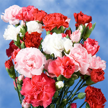 Cheap Valentines Day Spray Carnations Global Rose