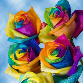 Rainbow Roses Rainbow Colors Kaleidoscope Roses   GlobalRose Color tones for all Your Choice of Rainbow Roses may vary due to the  computer monitor and or Mother Nature