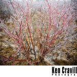 Oshkosh Wisconsin Winter Ice Storm Photo Ken Cravillion Photography