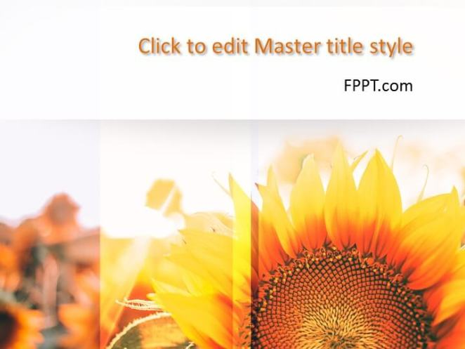 Sunflower PowerPoint template